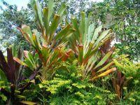 fauneetfloredepolynesie1-105