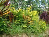fauneetfloredepolynesie1-106
