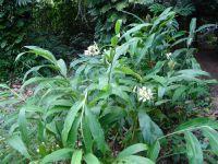 fauneetfloredepolynesie1-118