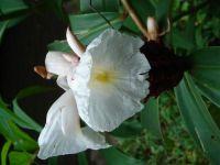 fauneetfloredepolynesie1-125