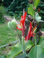 fauneetfloredepolynesie1-135