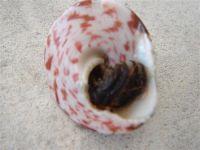 fauneetfloredepolynesie1-140