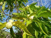 fauneetfloredepolynesie1-50