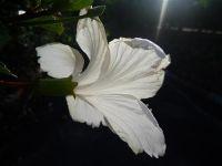 fauneetfloredepolynesie1-86