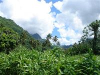 paysage_de_polynesie_1-27