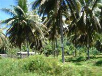 paysage_de_polynesie_1-28