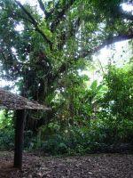 paysage_de_polynesie_1-32