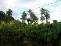 paysage_de_polynesie_1-34