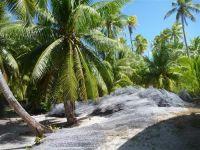 paysage_de_polynesie_1-63