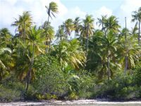 paysage_de_polynesie_1-82
